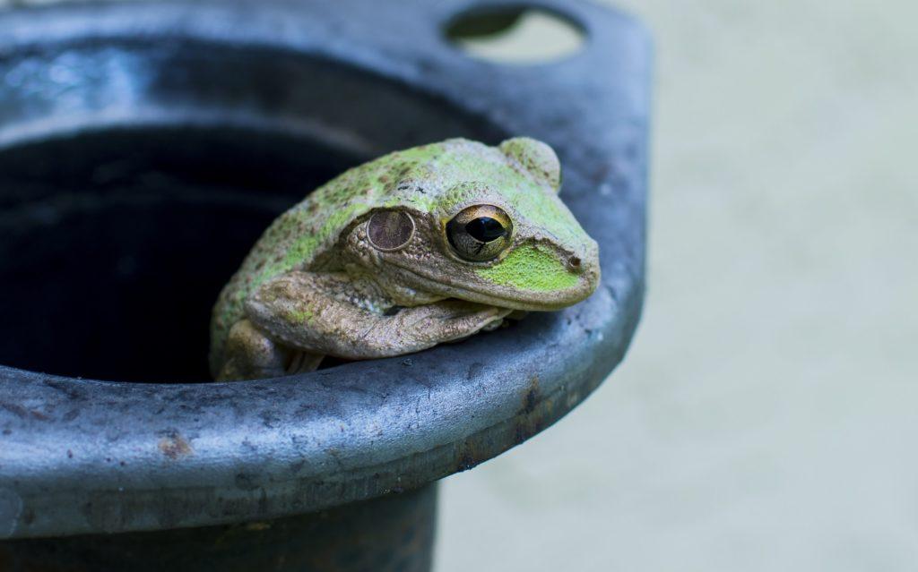 Zielona żabka, czyli o miłosnych czarach prosto z dawnego Śląska