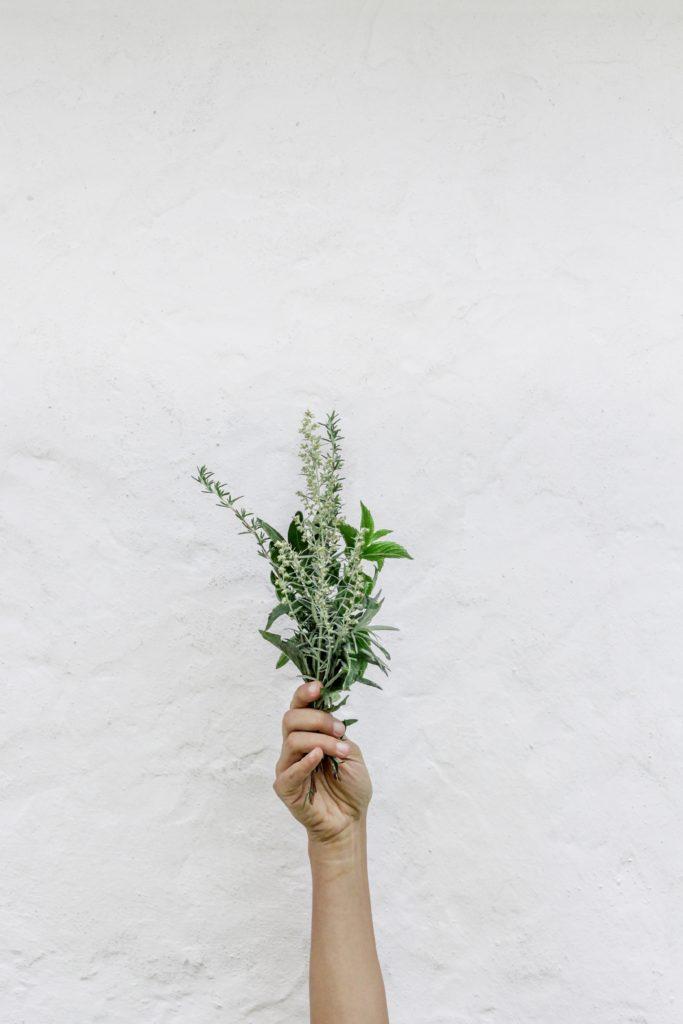 Symbolika ziół, krzewów i drzew, która nie powinna być obojętna żadnej Pannie Młodej